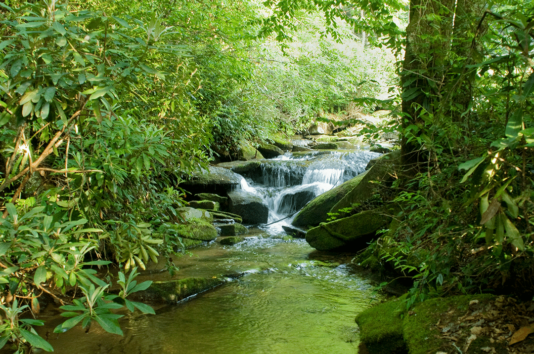 Stream and Waterfalls